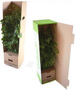 Einzelversandverpackung für Großpflanzen mit Topf