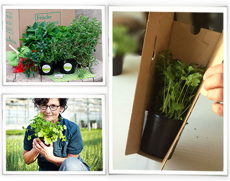 Versandverpackung für Pflanzen aus Wellpappe