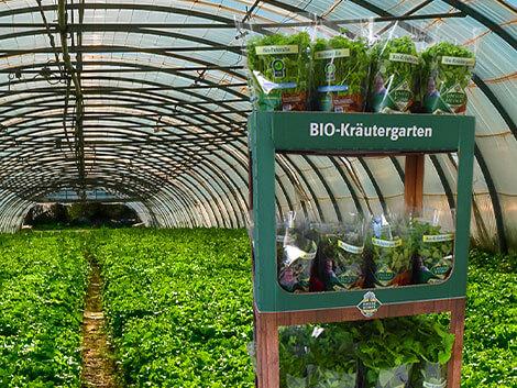 Kräuterdisplay für den Versand von Pflanzen und Kräutern
