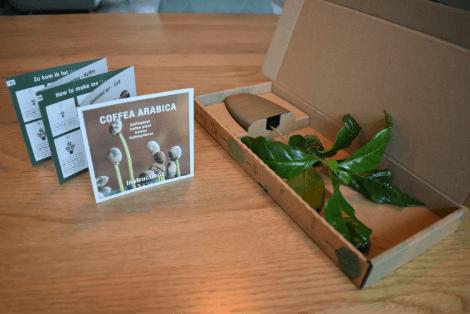 Pflanzenversandverpackung für Treemore