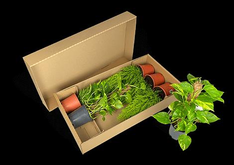 Nachhaltige Multiverpackung für bis zu 6 Pflanzen