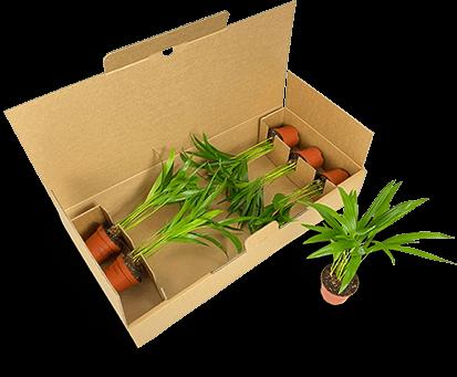 Stabile Verpackung für mehrere Jungpflanzen