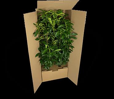 Versandverpackung für schwere und große Pflanzen
