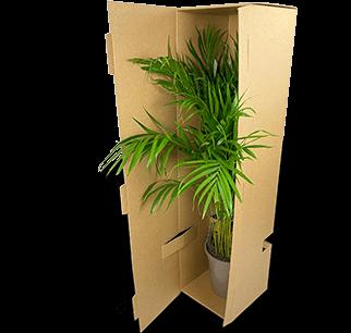 Sichere Einzelverpackung für hohe Topfpflanzen