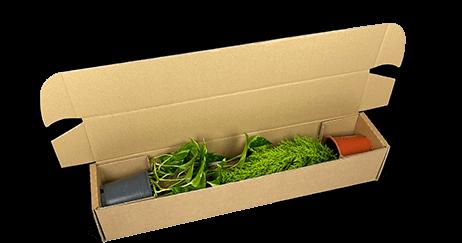 Materialsparende Versandverpackung für Topfpflanzen