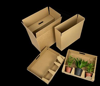 Umweltfreundliche Verpackung für drei Jungpflanzen
