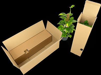Einzelversandverpackung für Pflanzen