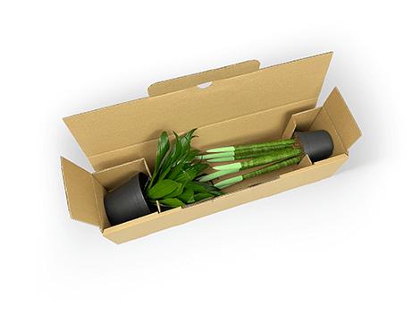 Einteilige Versandverpackung für Topfpflanzen