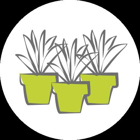 Skizzierte Abbildung mehrerer kleiner Pflanzen