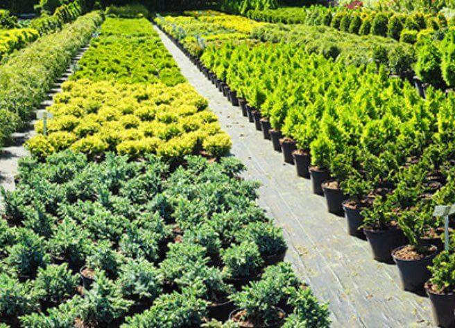 Umweltfreundliche Verpackungen für alle Arten von Pflanzen