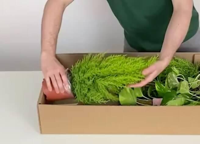 Nachhaltiger Transportschutz mehrerer Pflanzen